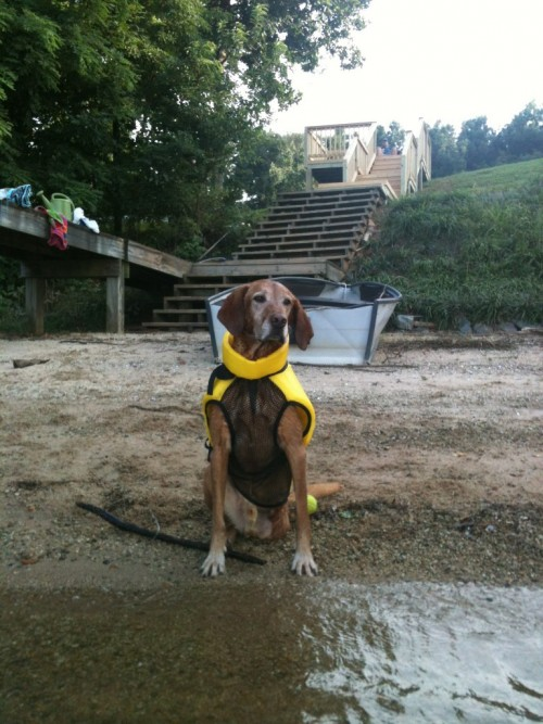 Nesta finally learned how to swim after moving to North Carolina.  Here is his first Tri-pawd swim test,  in his life vest.